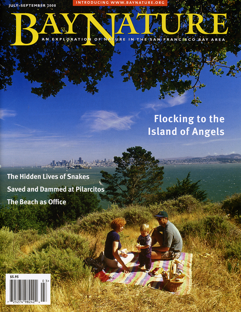Bay Nature magazine: July-Sept 2008 cover